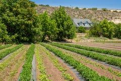 Urban Farming Stock Photos