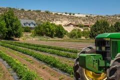 Urban Farming Royalty Free Stock Images