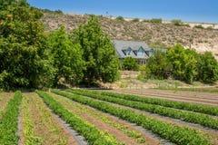 Urban Farming Stock Photography