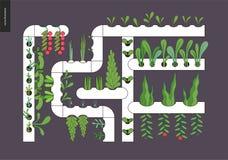 Urban farming and gardening - Hydroponics. Urban farming, gardening or agriculture. Hydroponics - Continuous-flow solution culture - nutrient film technique. The vector illustration