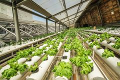 Urban farming in the rooftop of a building stock photography