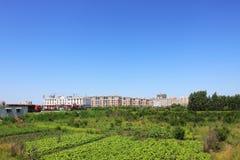 Urban farmland landscape Royalty Free Stock Image