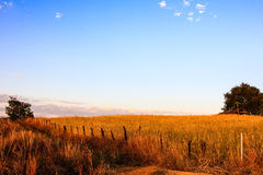 Urban fields  in Thailand. Urban fields in Thailand  with blue  sky Stock Photography