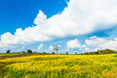 Urban fields  in Thailand and Crotalaria juncea. Urban fields in Thailand  with blue  sky Royalty Free Stock Photography