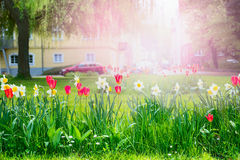 Urban flower bed with red and yellow flowers on a blurred background  the urban landscape and buildings Stock Photography