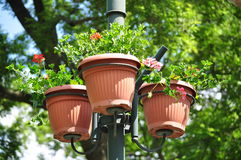 Urban flower pot Stock Images