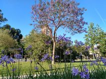 Urban forest in Valencia`s spring time. Urban forest Jardin del Turia in Valencia`s spring time Royalty Free Stock Photography