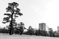 Urban Forest - Tokyo - city and trees meet royalty free stock images