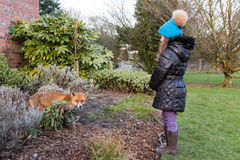Urban fox next to young child in park, during the day Stock Photos