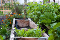 Urban Garden Royalty Free Stock Image