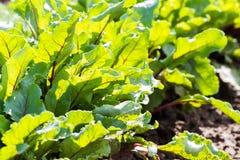 Urban Garden Stock Photos