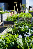 Urban Garden and Farming in spingtime Royalty Free Stock Images