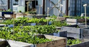 Urban Garden and Farming in spingtime Royalty Free Stock Photos