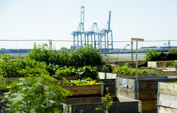 Urban Garden and Farming in spingtime Stock Photo