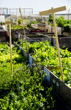 Urban Garden and Farming in spingtime Stock Images