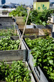 Urban Garden and Farming in spingtime Royalty Free Stock Photography