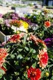 Urban Garden and Farming in spingtime Stock Photography