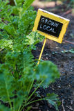 Urban garden Royalty Free Stock Images