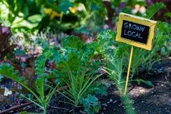 Urban garden Stock Photography
