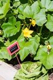 Urban garden Stock Images