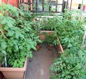 Urban garden in the terrace of the home Royalty Free Stock Photography