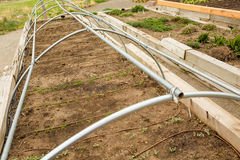 Urban garden Royalty Free Stock Photos