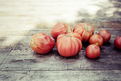 Urban gardening bio tomato. Bio self-sufficiency with raised bed Stock Images
