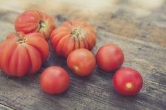 Urban gardening bio tomato Royalty Free Stock Photo