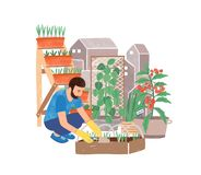 Free Urban Gardening Flat Vector Illustration. Male Gardener Planting Herbs Cartoon Character. Greening, Landscaping. Garden Stock Image - 164242171