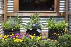 Urban gardening Stock Photo