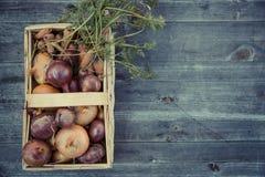 urban gardening vegetable harvest crop Stock Images