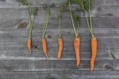 urban gardening vegetable harvest crop Stock Photos