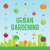 Urban gardening with vegetables icons set, seeds Royalty Free Stock Image
