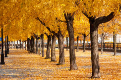 Urban golden leafs arch and carpet Stock Photo
