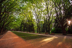 Urban green park with walking paths at sunset Stock Photo
