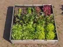 Urban greening Stock Photo