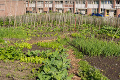 Urban greening Royalty Free Stock Image