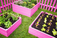 Urban herb garden. Pink raised beds with herbs and vegetables. Trendy garden design Royalty Free Stock Photos