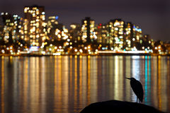 Urban Heron Night Royalty Free Stock Image