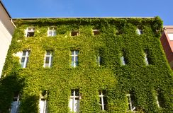 Urban House with Green Walls Royalty Free Stock Photos