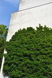 Urban House with Green Walls Royalty Free Stock Photography