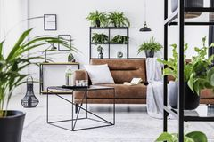 Urban jungle in modern living room interior with big comfortable leather couch royalty free stock image