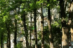Urban jungle: windows of residential house, blocked by trunks of tall trees Royalty Free Stock Image
