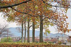 Urban landscape in autumn. Fall foliage in a residential area, Toyohashi, Aichi prefecture - Japan royalty free stock photo