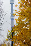 Urban landscape. Autumn leaves on the background of the TV tower Stock Photography