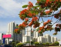 Urban landscape Royalty Free Stock Photography