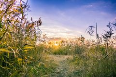 Urban landscape - Delta Vacaresti. This image was shot in Vacaresti Nature Park, in Bucharest Romania, it`s nearly at unset time Stock Photography