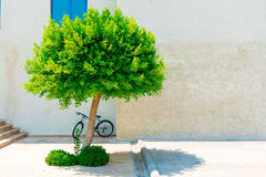 Urban landscape, lonely tree Stock Images