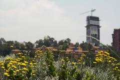 Urban Landscape. In Mexico City Stock Photos