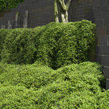 Urban landscaping Royalty Free Stock Photo